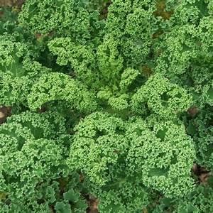 Pflanzen Bestimmen Nach Bildern : gr nkohl ~ Eleganceandgraceweddings.com Haus und Dekorationen