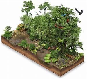 Amazon Rainforest Facts | Rainforest Location | DK Find Out