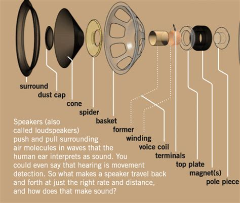 Speaker Part Diagram by How Speakers Make Sound And Other Cool Animated Graphics
