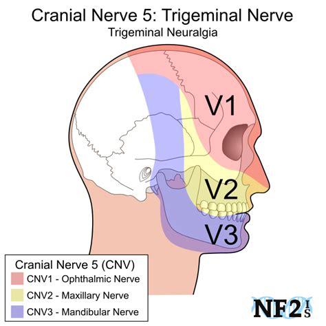 cn5 trigeminal nerve