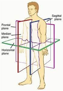 Rob Schneider  Anatomical Position