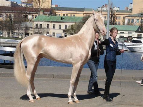 These 10 Rare And Beautiful Horses Are Like Nothing You've