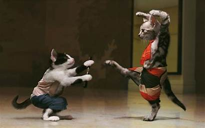 Kung Fu Fighting Cats Cat Kungfu Fight