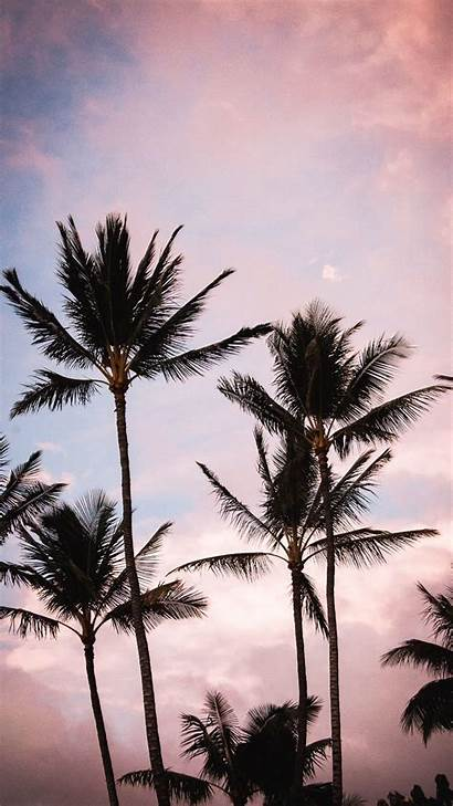 Aesthetic Palm Trees Tree Wallpapers Iphone Phone