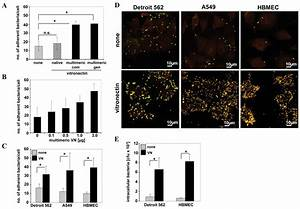 Integrin-linked kinase is required for vitronectin ...