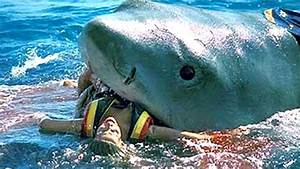 13 Shocking Facts About Sharks Youtube