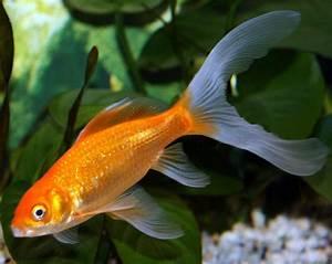 Freshwater Fish Wallpaper - WallpaperSafari