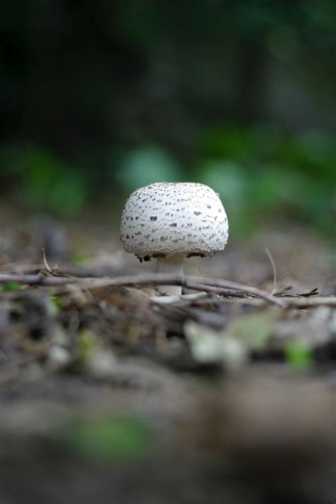 brown  green mushroom  stock photo