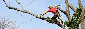 Abattage D Arbres Autorisation : abattage arbre lausanne arbre impec suisse romande ~ Premium-room.com Idées de Décoration