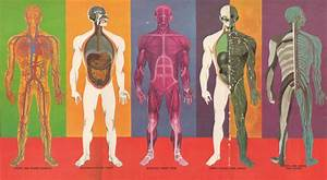 Facts Of The Human Body Systems For Kids