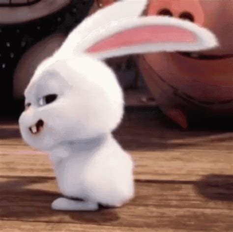 rabbit gif 10