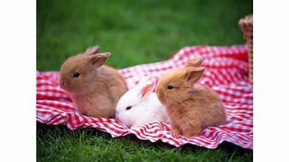 Bunnies Bunny 4k Cutest