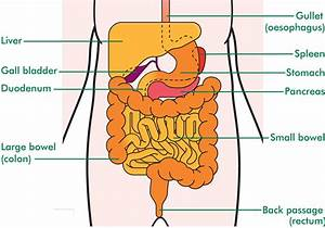 The Stomach - Understanding Cancer