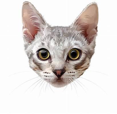 Cat Face Clip Clipart Transparent Animals Yopriceville