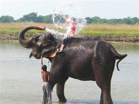 elephant tub india chitwan sightseeing visiting places drift nepal expedition