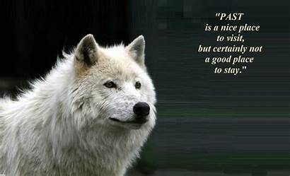 Wolf Spirit Wolves Quotes Animals Animal Sayings