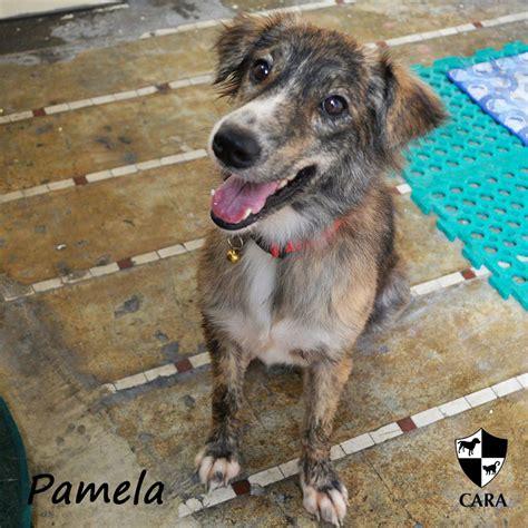 welfare philippines  adopt  pet   buy