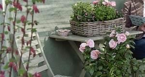 Rosen Für Balkon : rosen am balkon ~ Michelbontemps.com Haus und Dekorationen
