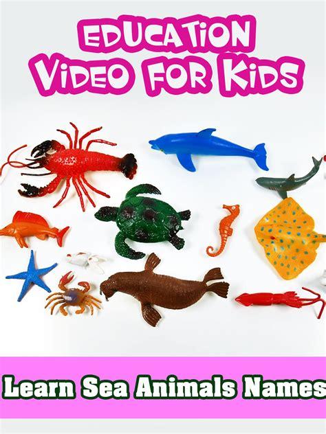 sea animals   images