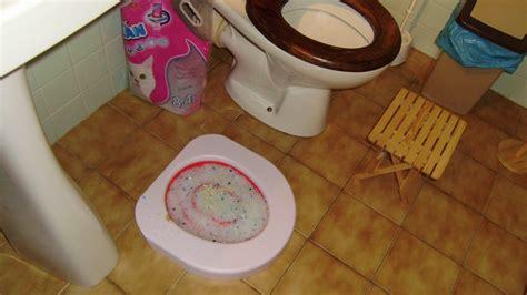 adaptateur toilette pour chat adaptateur toilette pour chat 28 images opini 243 n sobre litter kwitter kit de aprendizaje