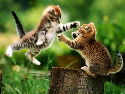 Cat Funny Cats Background Adorable Animal Kittens