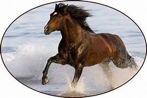 Window Art in Vinyl Etchings store: Brown Horse Running ...