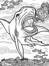 Coloring Shark Pages Quiver Sharks Hungry App Dover Adult Printable Colouring Publications Animals Adults Ocean Sheets Tiger Willkommen Bei Doverpublications sketch template