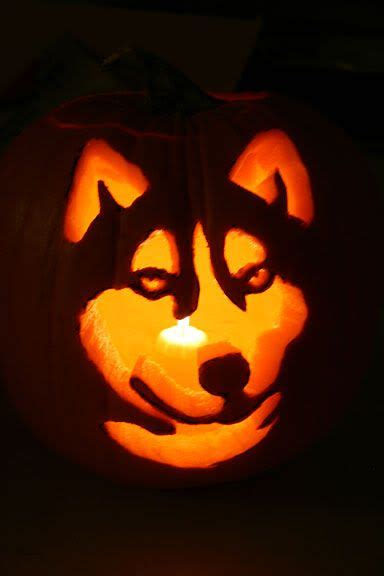 puppy pumpkin carving pin by holly psinas on halloween pinterest