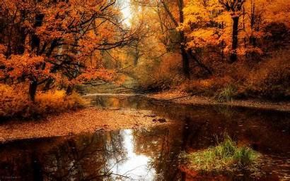 Forest Desktop Autumn Backgrounds Wallpapersafari