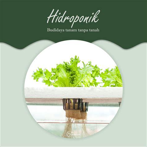 Ini sekian resep bakwan jagung ala fimela dengan banyak variasi. Hidroponik (Budidaya Tanam Tanpa Tanah) | Yuk Nanam