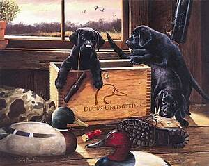 ducks unlimited labrador pictures | Black Lab Puppies ...