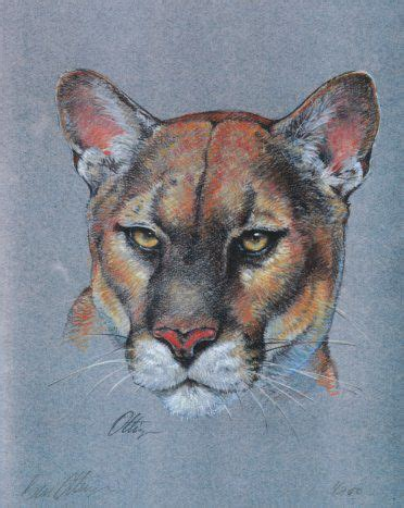 mountain lion colored pencil print animal sketches