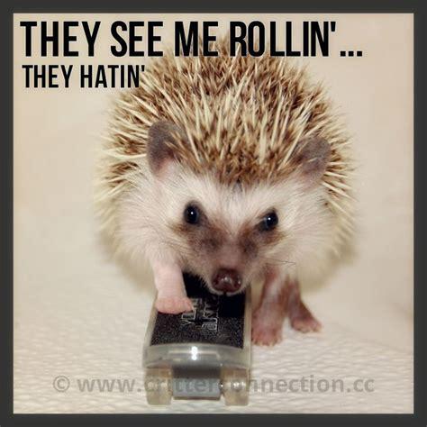Hedgehog Meme - 111 best hedgehog memes funnies quotes and misc millermeade farm s critter connection