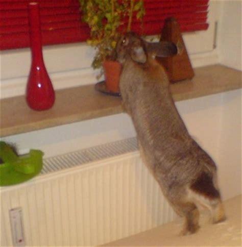 kaninchen in der wohnung kaninchen und zwergkaninchen infos und haltung