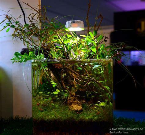 Cube Aquarium Aquascape by Nano Cube Aquascape Aquascaping Aquarium Nature