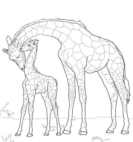Baby Giraffe and Mother coloring page from Giraffes