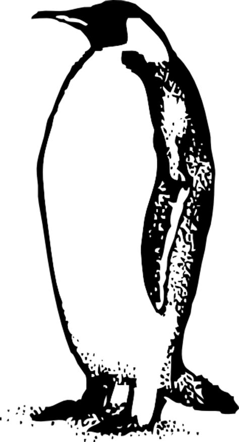 penguin clipart black and white penguin clip at clker vector clip