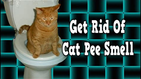 Get Rid Of Cat Pee Smell, Remove Cat Urine Smell, How To