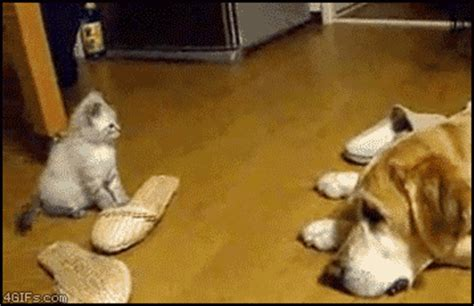cute cat reaction gifs
