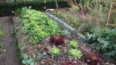 que planter dans potager en novembre