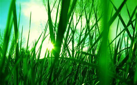 Green Grass Hd Hd Desktop Wallpapers 4k Hd