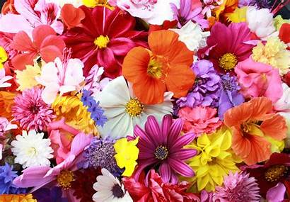 Colorful Flowers Wallpapers Nature 4k Backgrounds 1387