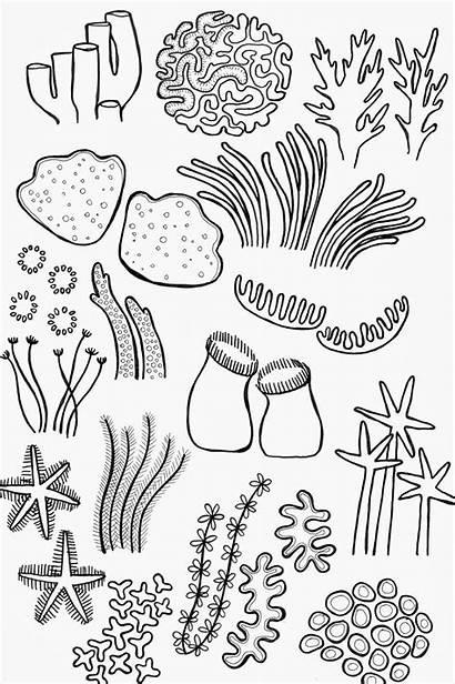 Coral Reef Drawing Coloring Pages Ocean Drawings