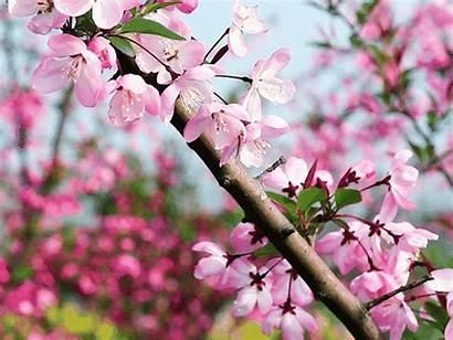 Spring Chengdu Topchinatravel Blossom
