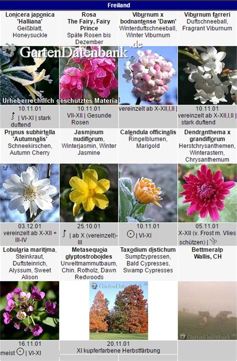 Was Blüht Im November? Spätherbst Im Garten