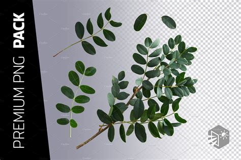 bush leaves png images high quality nature stock