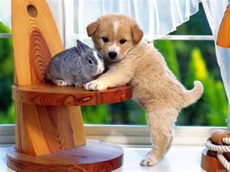 Pet Animals Wallpapers - wallpapers puppies dogs backgrounds
