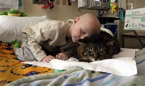 therapy cats why cats are the best therapists and therapy pets cattime