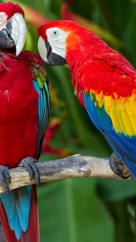 wallpaper parrot plumage branch exotic red blue animals