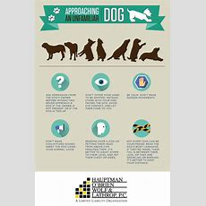 Tips For Safely Approaching An Unfamiliar Dog, Avoiding Dog Bite Injuries  Hauptman, O'brien